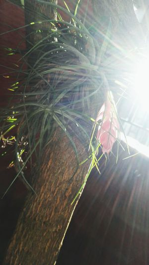 Nature Beauty In Nature Macro Plant Fragility Bromelias Bromeliad Flower