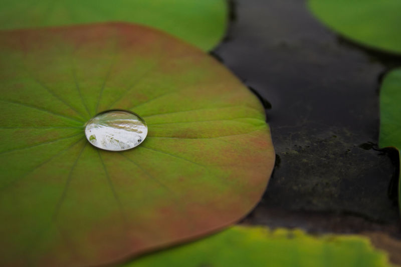hydrophobia lotus effect in the nature Lotus Effect Beauty In Nature Close-up Day Fragility Freshness Grass Hydrophobic Leaf Nature No People Outdoors Plant