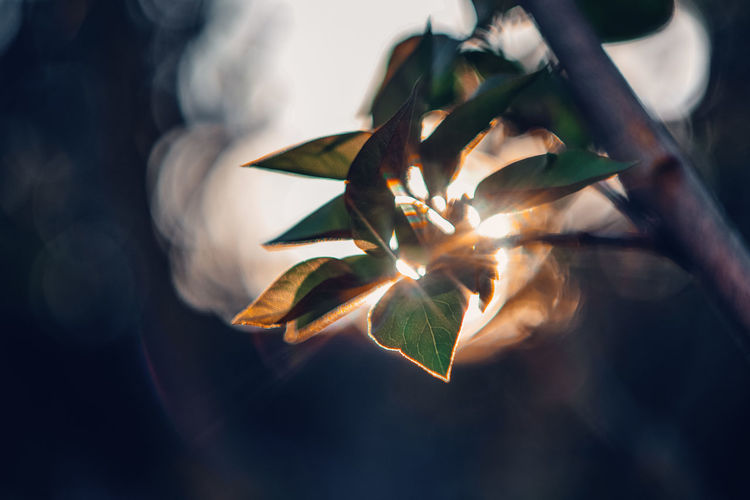 Sunrays Exceptional Photographs Silhouette EyeEm Nature Lover EyeEm Gallery Poland Bokehlicious Bokeh Lights Bokeh Love Leaf Tree Gold Colored Close-up Sky Blooming In Bloom Plant Life Blossom Botany