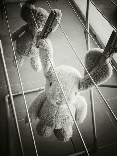 No People Close-up Soft Toys Laundry Kids Laundry Bunny  Elephant Hanging Drying Got Wet Black&white Vintage