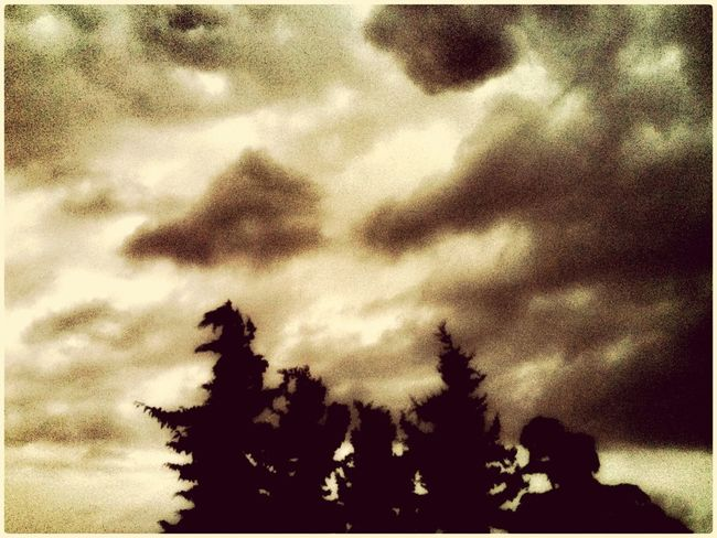 Rain Wind Trees Nature IPhoneography Storm