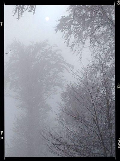 Schneepalme Enjoying Life
