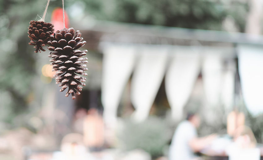 pine cones decorated at restaurant with blurred couple dinner together, retro tone Abstract Atmosphere Autumn Backdrop Background Bokeh Cones Couple Decorate Dinner Dry Flag Hang Lifestyle Light Pine Relationship Reserve Restaurant Retro Time Together Tone
