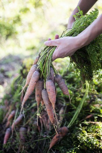 Close-up of hand holding plant growing on field
