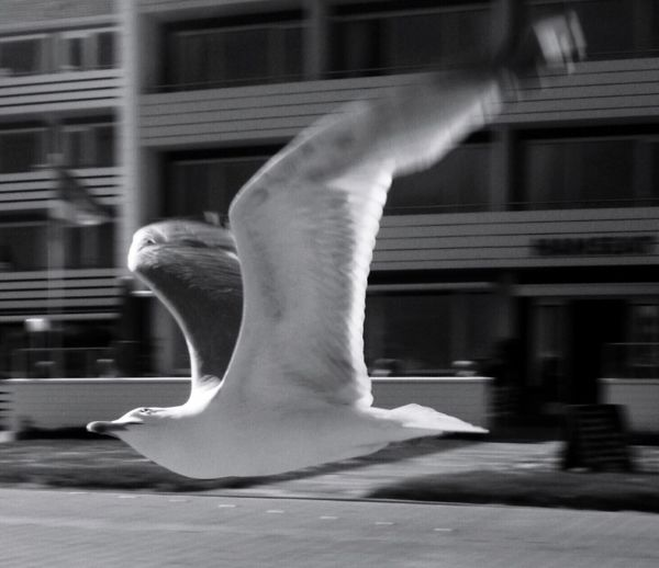 Gull Helgoland Morten Müller-Schnelle Möwe Gull Motion Blurred Motion One Animal Building Exterior Day No People