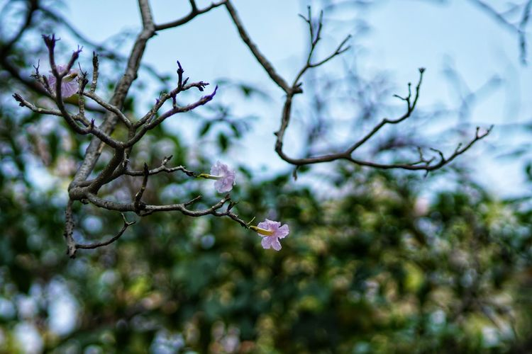 No People No Person Day Tree Flower Branch Cold Temperature Winter Close-up Sky Plant In Bloom Blooming Plant Life Wildflower Plant Part