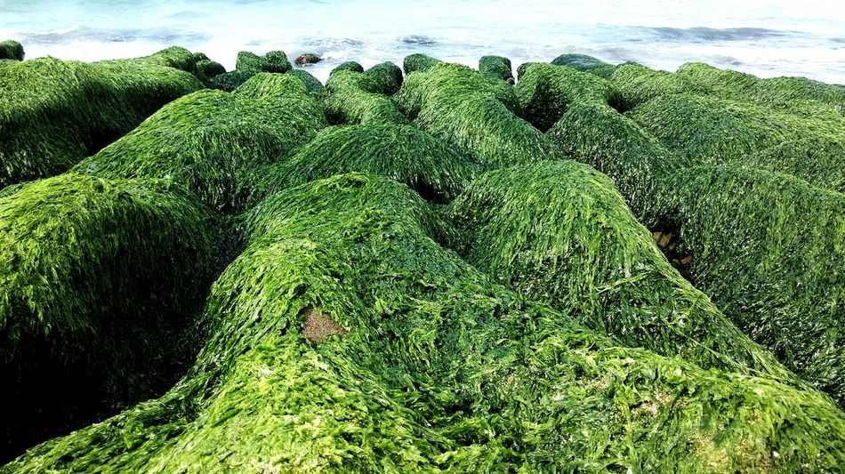 The KIOMI Collection Green Green Green!  Green Grass Green Nature Shoreline Being A Beach Bum Relaxing Waves, Ocean, Nature Getting Inspired The Great Outdoors With Adobe Nature's Diversities The Great Outdoors - 2016 EyeEm Awards Earthday