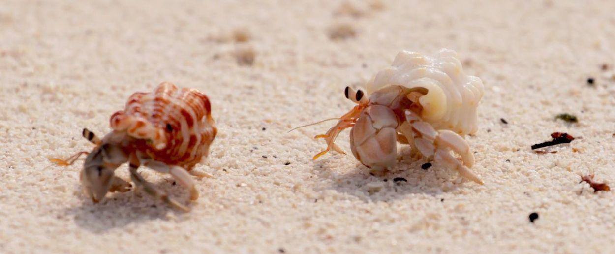 Hermit crabs at sandy beach