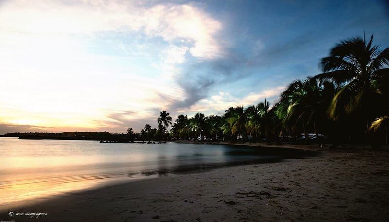 Beach Sunset Palm Tree Outdoors Nature Tourism Sea Day