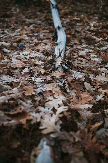 Wintertime Winter Fall Trekking Leaf Plant Part Autumn No People Nature Selective Focus Fragility Change Leaves High Angle View Dried Plant Messy Outdoors Field Falling Day Vulnerability  Land Trunk Trunk Tree