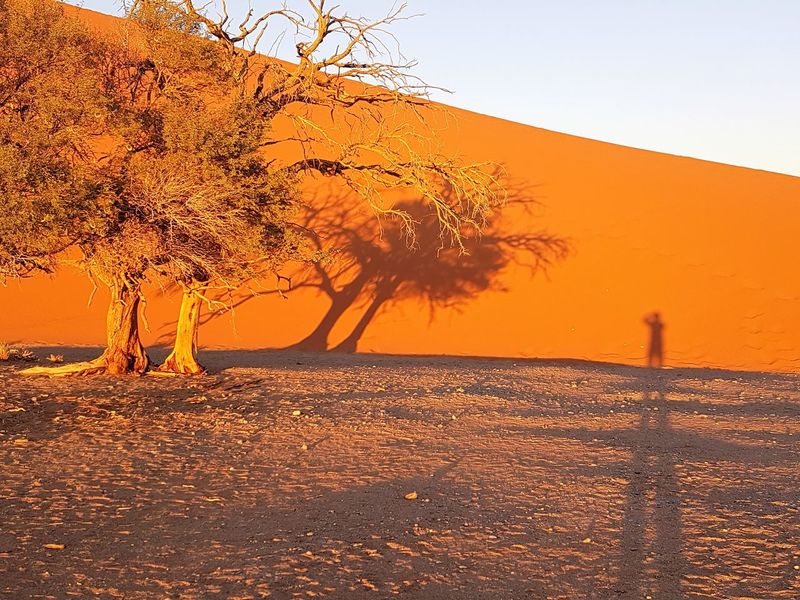 Dune 45, Sunrice, Sossusvlei, Landschap. Wonderen Van De Wereld , Landscape. Autumn Beauty In Nature Day Horizon Over Water Landscape Nature No People Orange Color Outdoors Scenics Sea Sky Sunset Tranquil Scene Tranquility Tree Water