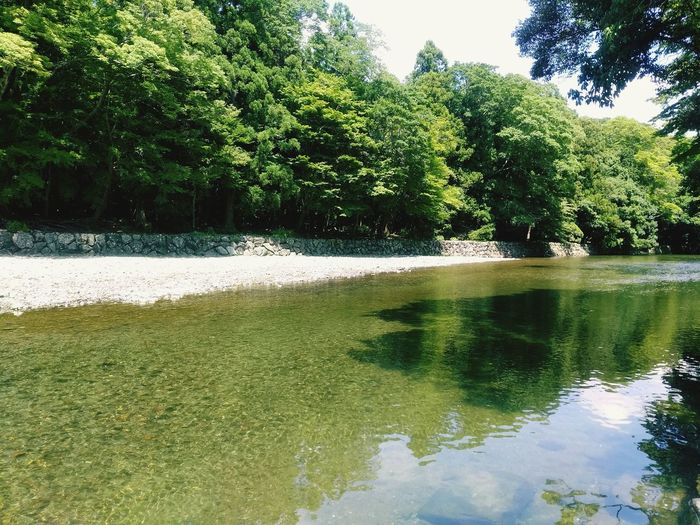 夏はきらめき。 Beauty In Nature River View Ise Jingu Summer Growth Water Nature Japan Photography Japanese Shrine First Eyeem Photo