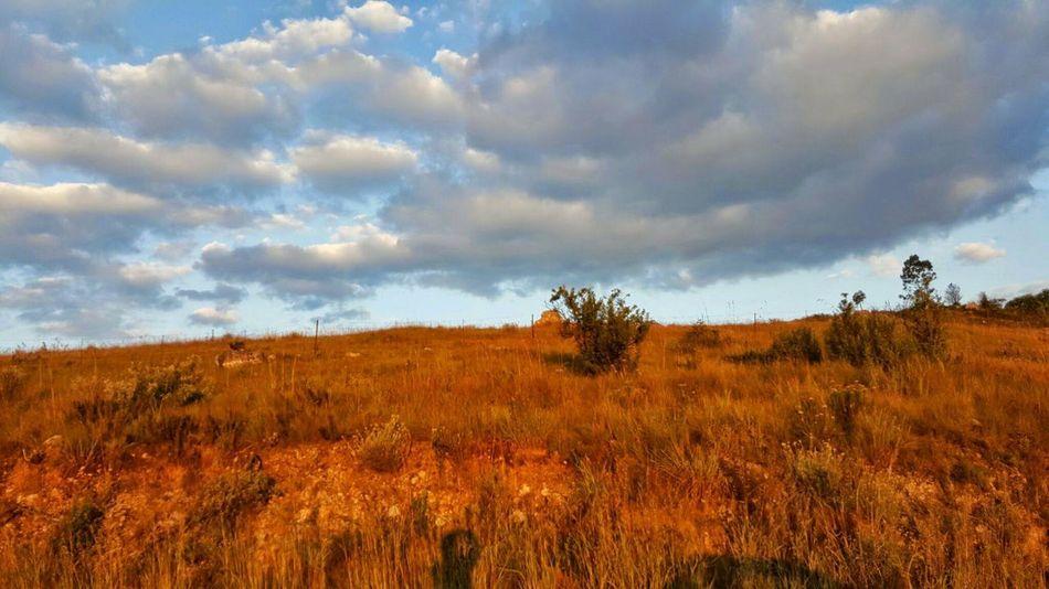 Reunion  Île De La Réunion  Iledelareunion Iles  Ocean Indien EyeEm Selects Tree Cloud - Sky Nature Field Landscape Dramatic Sky Beauty In Nature
