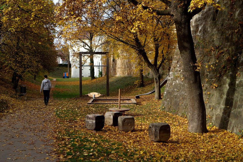 Last fall was yellow Tree Autumn Plant Change Full Length One Person Nature Day Rear View Plant Part Architecture Leaf Walking Outdoors Park Adult Capture Tomorrow