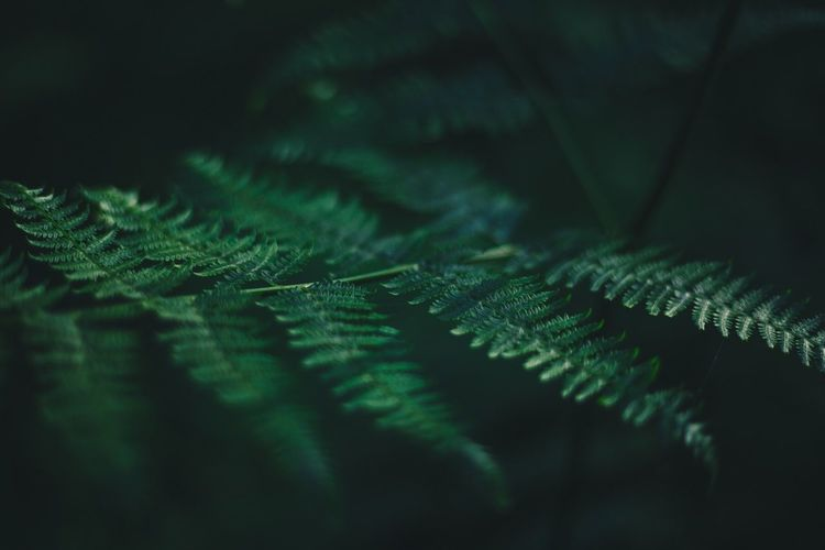 Green Color Plant Growth Selective Focus Leaf No People Summer Exploratorium Close-up Plant Part Nature Tree Beauty In Nature Day Fern Tranquility Fragility Outdoors Vulnerability  Freshness Backgrounds Full Frame