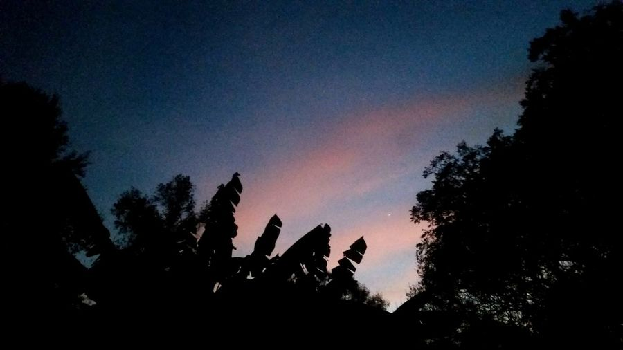 ◇ Like A Secret ◇ Throwback Fromthearchives Sunset Silhouette Pink Color Alabama Outdoors Colorful Sky Peach Backyard Naturelovers Perspective How I See The World Tree Silhouette No People Alabama Trees And Sky Rural America Mobile Photography OpenEdit Astronomy Tree Sky