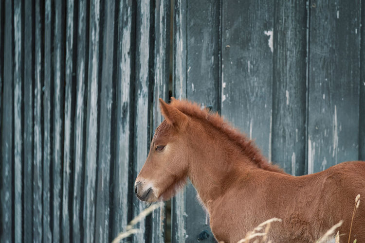 Side view of a foal