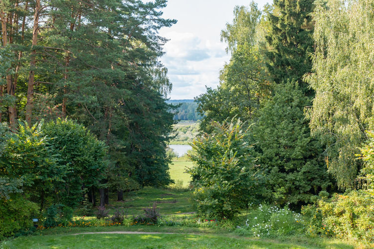 Glade leading to the river, Russia, Polenovo Russia Russia. Polenovo Tula Oblast Beauty In Nature Day Forest Grass Green Color Landscape Museum Nature No People Outdoors Polenovo Scenics Sky Strakhovo Tranquil Scene Tranquility Tree