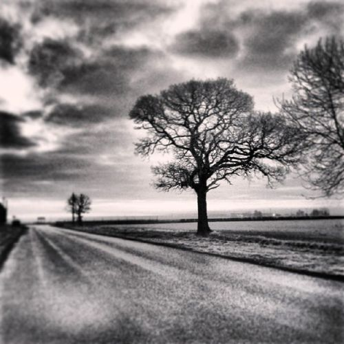 Grey mornings Tree_captures Solo_trees Beaut_trees