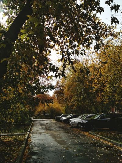 Tree Transportation Outdoors Road Car Growth Land Vehicle Branch No People The Way Forward Autumn