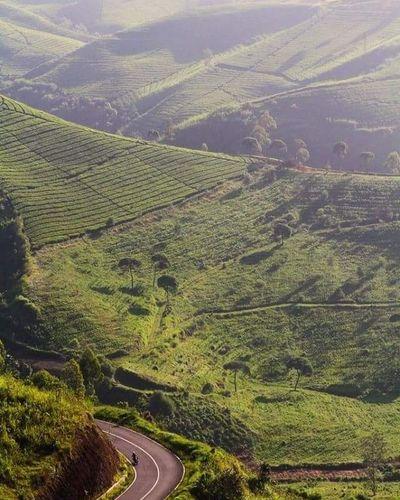 One fine morning at Cukul Cukul Pengalengan Westjava Explorewestjava Jawabarat INDONESIA Landscape Green Pesonaindonesia Wonderfulindonesia Landscapes With WhiteWall