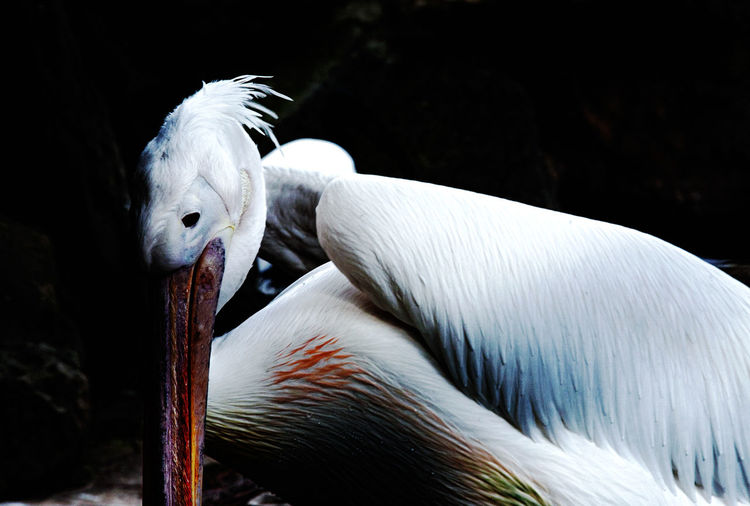 Hello World ,bird has ever been,bird,animal,