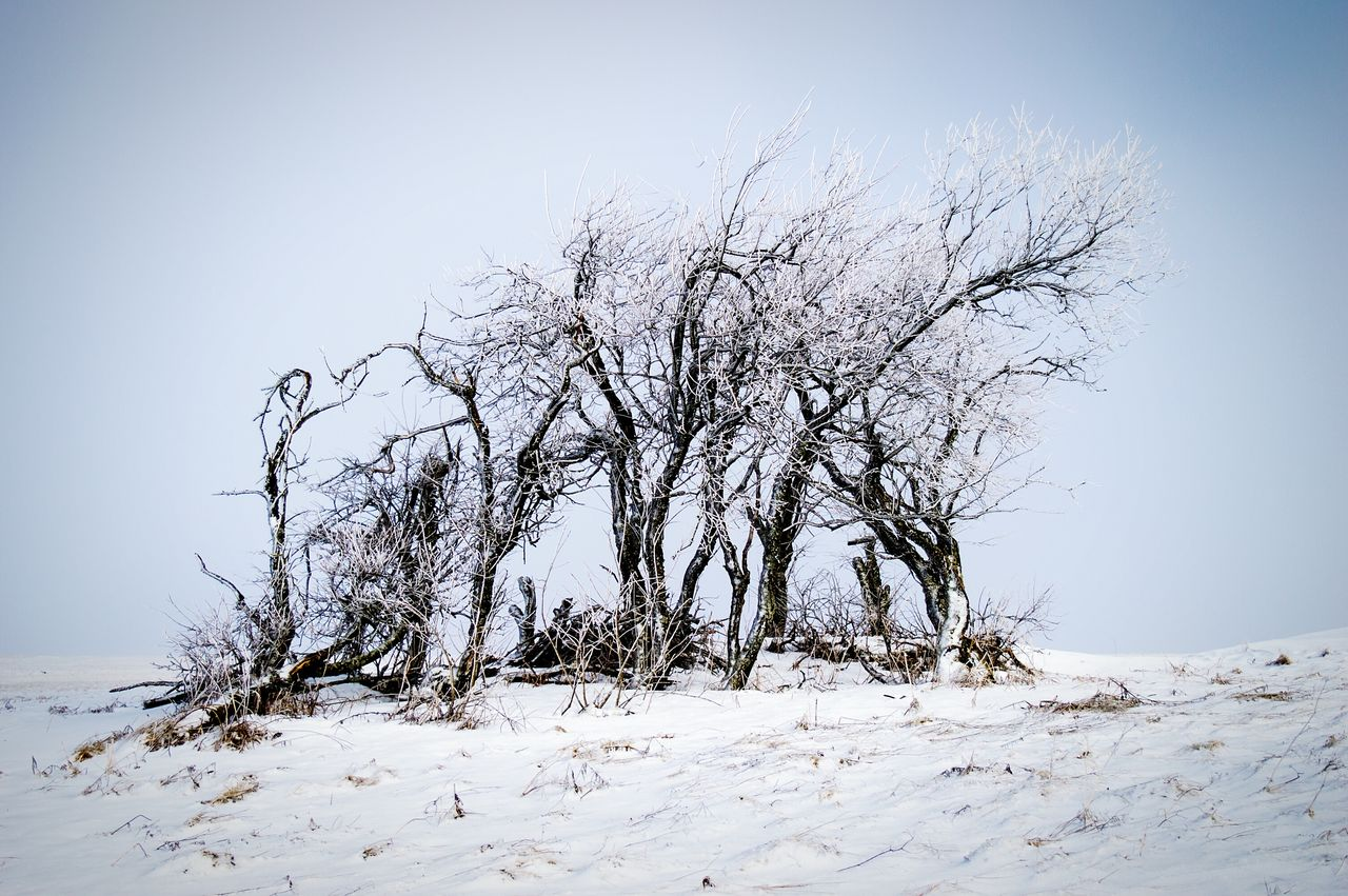 Nature No People Beauty In Nature Outdoors Tree Sky Clear Sky Day Winter Group Of Objects Tree Snow Covered Snow Frosty Frosty Days Frosty Nature Trees Rhön Wasserkuppe Germany Landscape Winterscapes Shades Of Winter