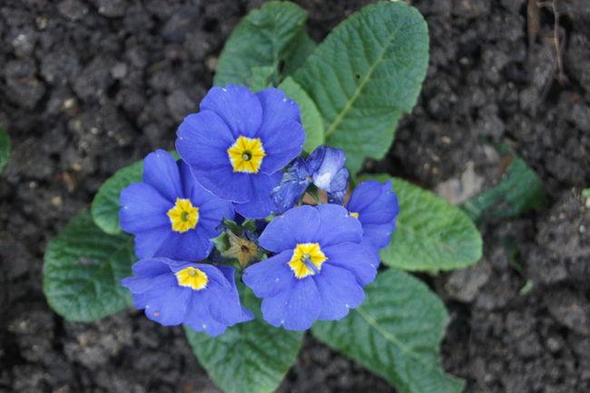 #Luxengurg #Garden Beauty In Nature Flower Freshness Nature