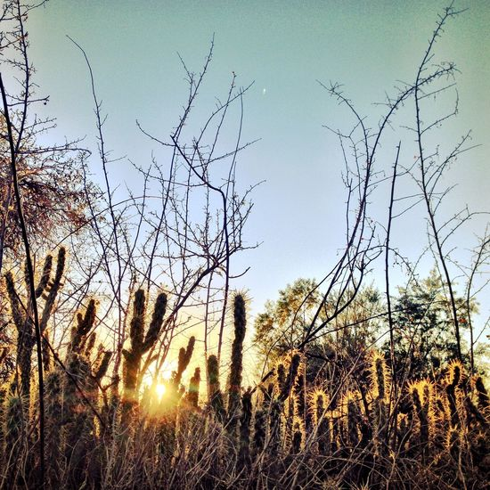 Cactus Sunlit Warmth Beauty Expect The Unexpected  Sunrise_Collection EyeEm Nature Lover Beautiful Nature Nature Photography Nature Landscape_photography Landscape_Collection Naturephotography