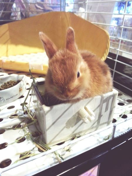 Cute baby bunnie Bunnie Bunnies ❤️ Cute Pets Hi! Bunnies