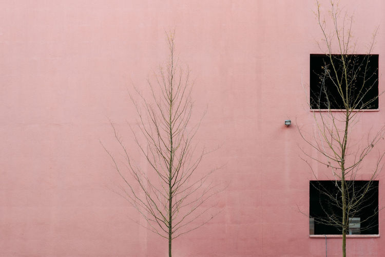 Low angle view of bare tree against building