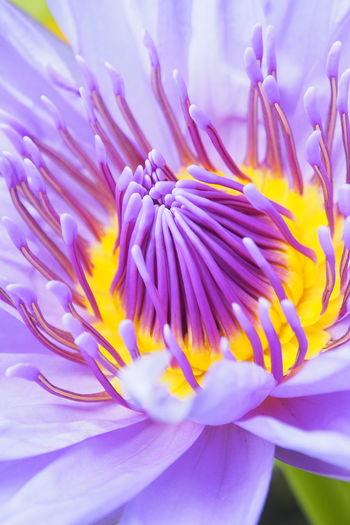 Blooming Colors Flower Gold Macro Multi Colored Nature Nature Diversities Pastel Petal Purple Wild EyeEm Best Shots Eyeem Collection EyeEm Nature Lover