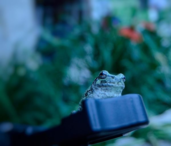 Frog on a tripod