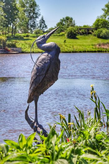 One Animal Bird Animals In The Wild Animal Themes Great Blue Heron Animal Wildlife Heron Day Nature Outdoors Water Growth No People Plant Perching Tree Beauty In Nature