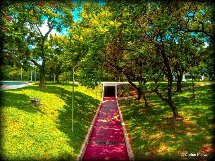 Passagem subterrânea Brasília - Brazil Brasilien Photo Fotografia Foto Photography No People Fotoshooting Brasília Minha♥ Fotografia Photo Gavião Passarela