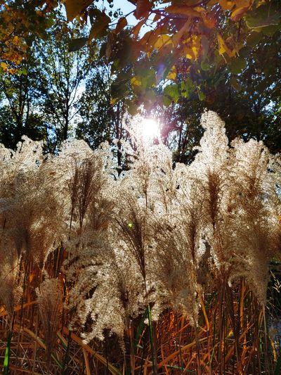 beautyful autum Autumn Sun October Grass Sunlight Tree Backgrounds Full Frame Sky Pollen Woods Leaves Shining Fall Sunrays