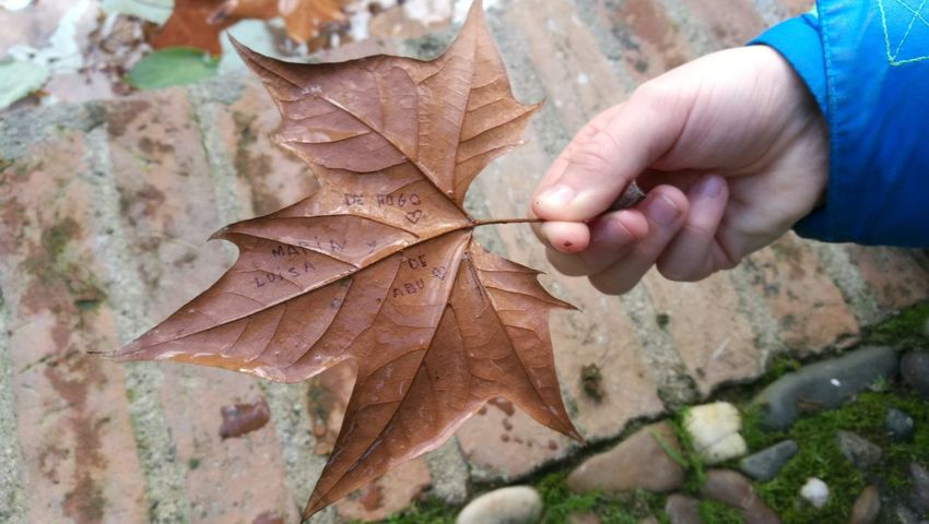 Autumn Human Hand Human Body Part Close-up Leaf Parque María Luisa Nature