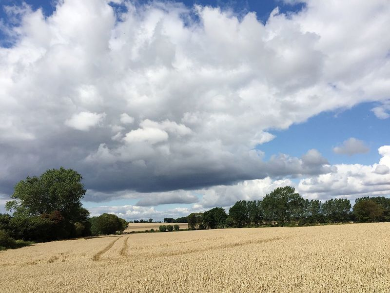 Cloud - Sky Agriculture Field Sky Landscape Farm Nature Day Rural Scene Tranquility Tranquil Scene Growth Crop  Scenics Beauty In Nature No People Tree Outdoors Hay Bale Combine Harvester Ostsee Waabs