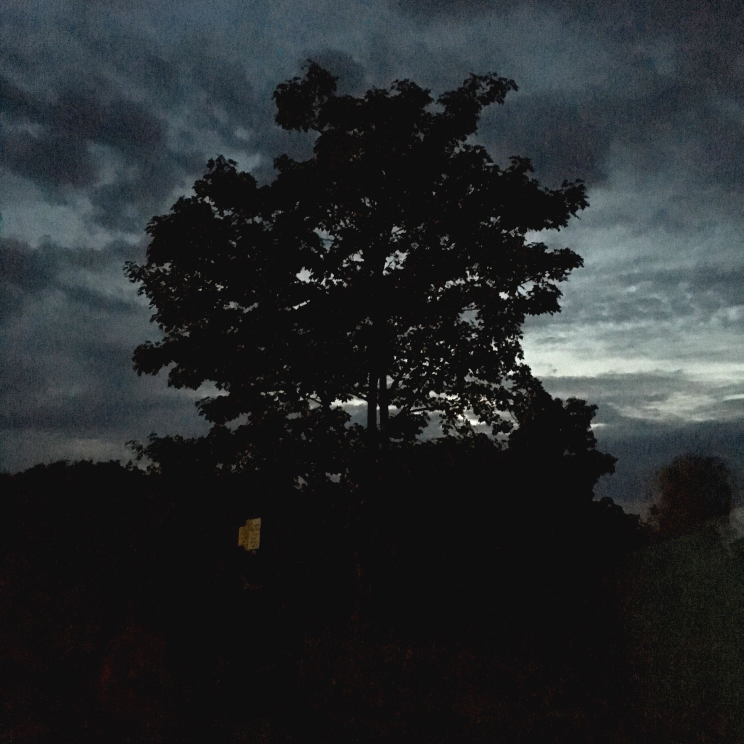 tree, silhouette, growth, sky, tranquility, tranquil scene, nature, low angle view, scenics, beauty in nature, cloud - sky, branch, mountain, tourism, non-urban scene, single tree, tall - high, outdoors, majestic, outline, no people, remote, solitude, cloudy