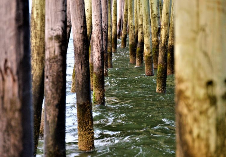 The Pier Atlantic Ocean Pier The Pier Travel Virginia Beach Day Nature No People Ocean Outdoors Pillar Pillars Pillars Support Sea Sea Shore Selective Focus Tourism Travel Destinations Water Wood - Material Wood Posts Wooden Pier Wooden Pillars Wooden Post Wooden Posts