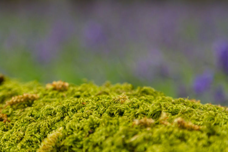 Close-up of moss growing on field