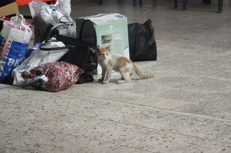 Little player ^_^`Cat Randomly Cute Cats Bus Station