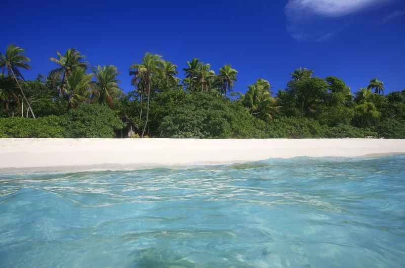 Paradise Beach at the Fiji Islands Water Tropical Climate Palm Tree Sea Sky Tree Tranquility Beauty In Nature Plant Nature Tranquil Scene Scenics - Nature Blue Land No People Day Outdoors Swimming Pool Tropical Tree Coconut Palm Tree Turquoise Colored Fiji Fiji Islands Beach