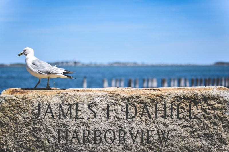 Seagull perching on rock with text