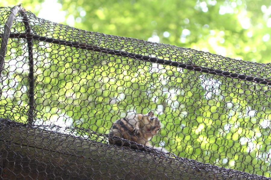 In the Zoo ✌︎✌︎✌︎ How pretty he is! Little Animal Cute Net Green