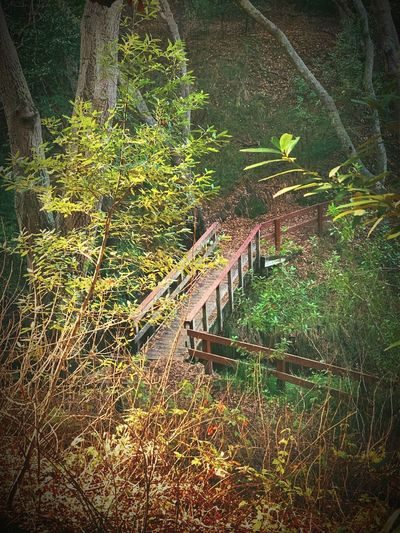 """The Glen"" A small footbridge spans a creek in a secluded glen of a suburban open space in the San Francisco, California East Bay Area. Footpath Hiking Trail Secluded  Footbridge Bridge Glen Nature No People Day Growth Beauty In Nature Green Color Tranquility"