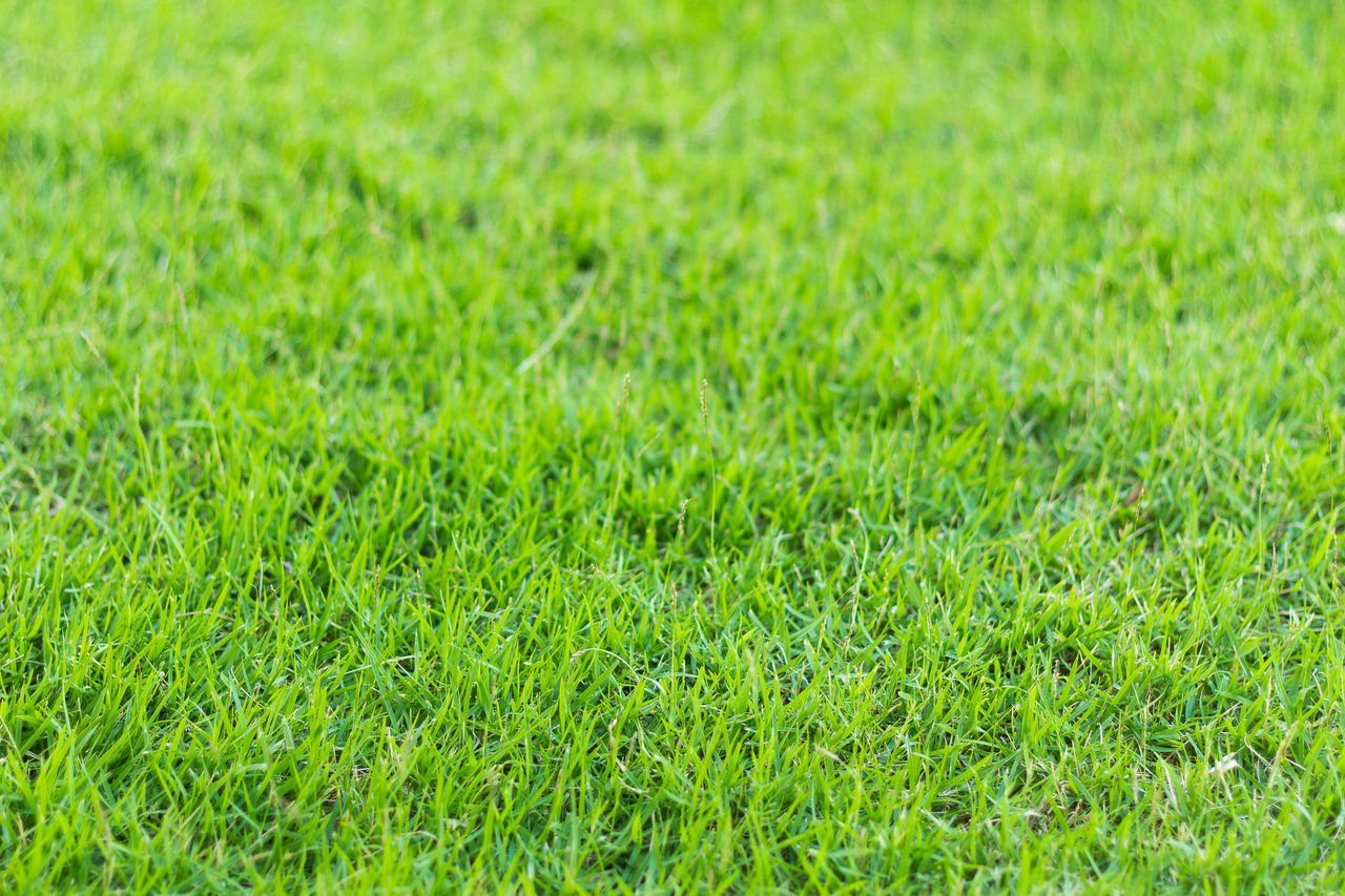 FULL FRAME SHOT OF GREEN GRASS
