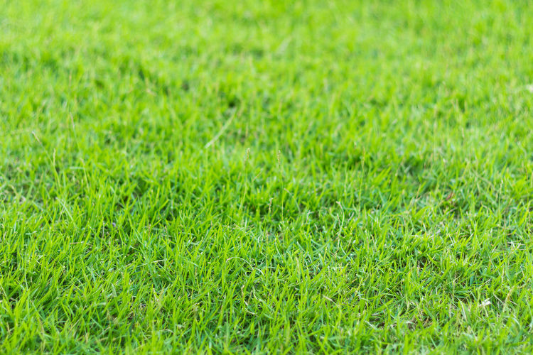 Closeup shot on green grass in the garden Backgrounds Close-up Day Field Fresh Full Frame Grass Green Color Green Grass Growth Nature No People Outdoors Playing Field Soccer Soccer Field Soccor Field Sport