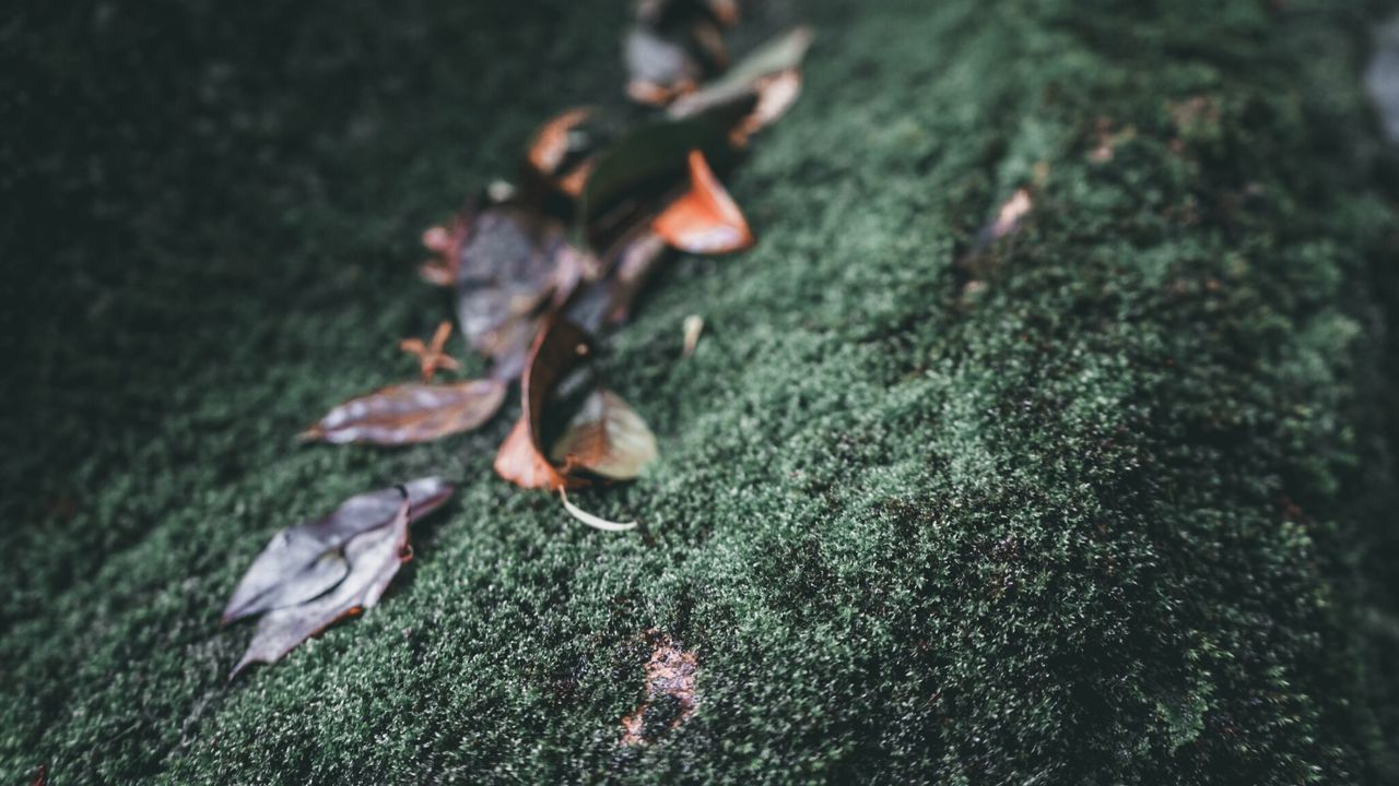 selective focus, nature, leaf, plant part, close-up, plant, day, no people, dry, growth, falling, land, outdoors, beauty in nature, tree, vulnerability, green color, fragility, orange color, autumn, leaves, change