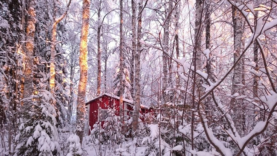 Winter Winter Wonderland Snow Snowy Trees Cottage Red Birch Forest Serene Outdoors Tranquility Landscape Snow White Color